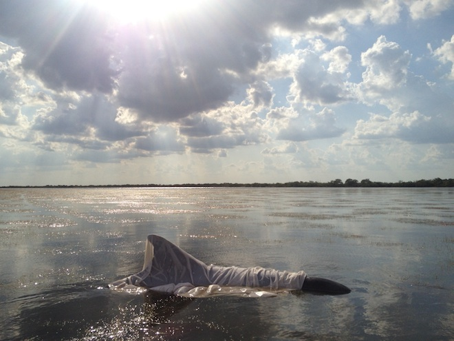 live-dolphin-rescue-sheet.jpg